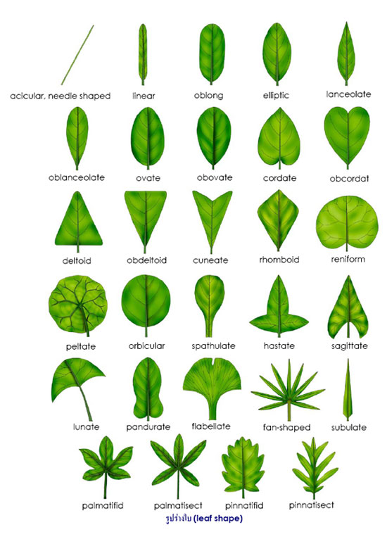 Leaf on Tree Activities For Kids